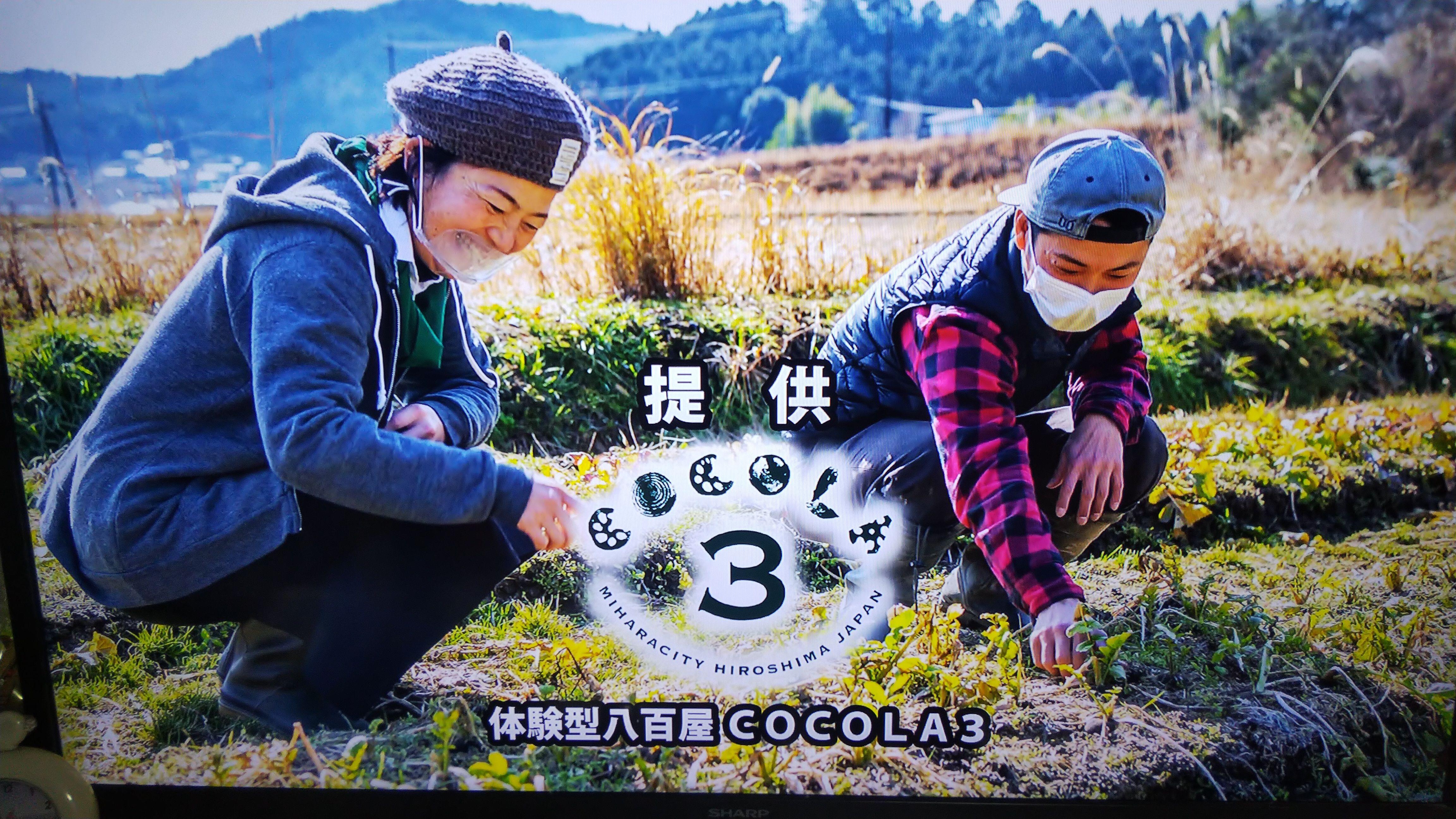 体験型八百屋COCOLA3 ココラサンネットショップ